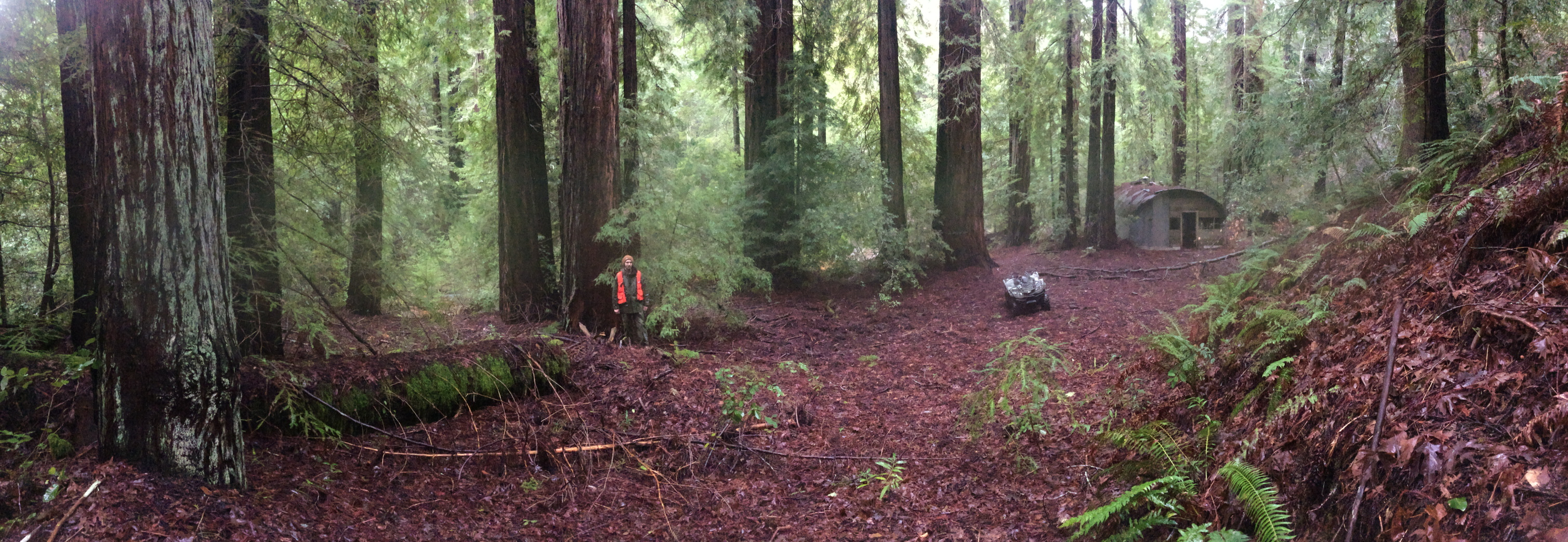 Forester standing in a redwood forest with his quad and an old structure in the distance